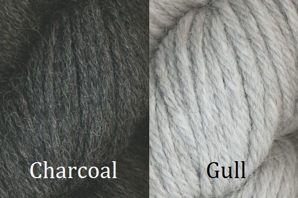 Charcoal Gull